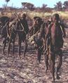 Egy busman csoport átvonul a Kalahári sivatagon