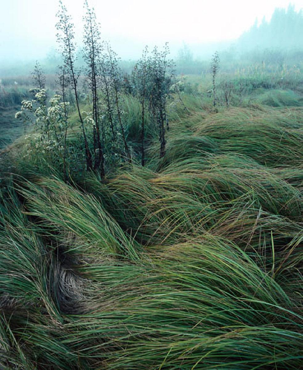 erős szél hatása a szervezetre cukorbetegség és magas vérnyomás hogyan kell kezelni