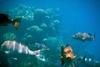A koralltelepek a trópusi tengerpartok közelében alakulnak ki