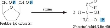 A glicerinaldehid-3-P képződése