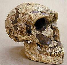 Neandervölgyi ősember koponyája