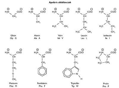 Az apoláris oldalláncú természetes eredetű aminosavak