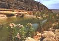 Magasra nőtt vízparti növények a Vádi-Iherir partján (Délkelet-Algéria)