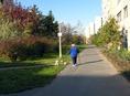 kutya-sétáltatás a Fővárosban