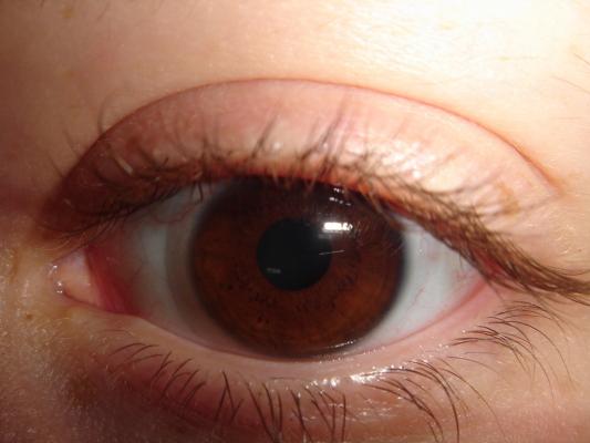 A felnőtt szeme